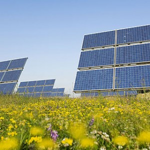 Ground-mounted solar array in a field of wildflowers